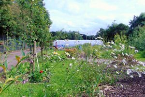 Community Garden Gortin Outdoor Activity Centre